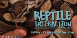 Reptile Interaction 06.01.2018